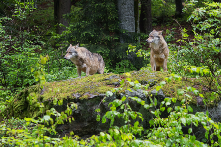 From Sheep To Wolves: How To Change A Culture Of Fear